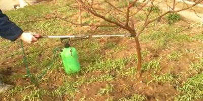 Дачный влог №2. Где зимуют виноградные улитки