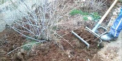 Дачный влог №6. Как сеять сидераты, органическое земледелие