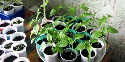 Задание №1: меры по защите рассады цветочных и овощных культур
