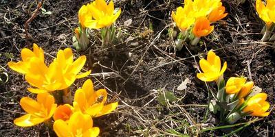 И к нам неторопливой поступью идёт весна!