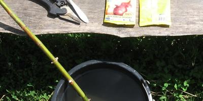 """Водорастворимые гранулы для овощей """"Агрикола"""". Корневая подкормка озимого чеснока"""