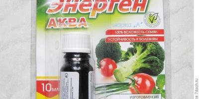 Энерген АКВА. Проверка всходов  семян кукурузы, посеянных в открытый грунт
