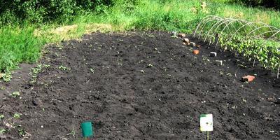Энерген АКВА. Проверка всходов семян кабачка, посеянных в открытый грунт. Развитие растений