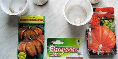 Энерген АКВА. Предпосевная обработка семян тыквы. Посев семян в грунт. Первые всходы