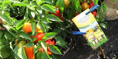 """Водорастворимые гранулы для овощей """"Агрикола"""".  Первый сбор и взвешивание урожая перцев"""
