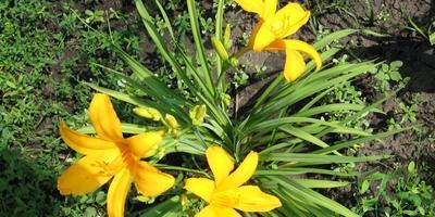 Деревенские цветы. Яркие краски дарят тепло, продлевают лето...