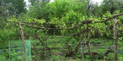 Здесь будет виноградник заложен!