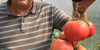 100 000 рублей за помидор - самая большая кисть