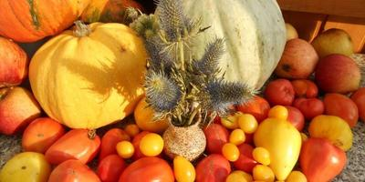 Урожай тыкв разных сезонов, и как с ним справиться