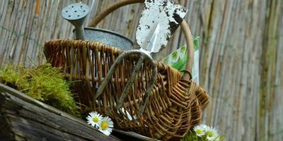 """""""Съедобное-несъедобное"""", или 10 любимых занятий садовода"""
