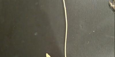 Помогите определить лекарственное растение по гербарию