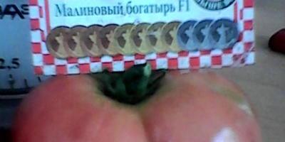 Помидоры малиновое чудо - бельевые веревки не выдерживают, рвутся от нагрузки. Это действительно чудо