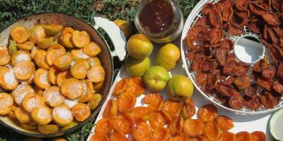 Абрикосовые заготовки: из одного получается два продукта - курага и джем
