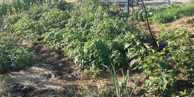 Огород на 1 сотке