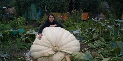 Как я вырастил самую большую тыкву в России