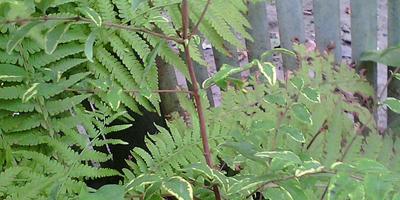 Помогите определить эти два растения!