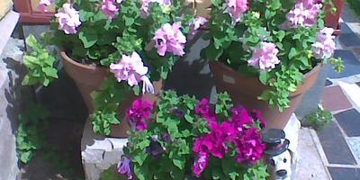 Керамические цветочные горшки из ОБИ - естественный контейнерный садик
