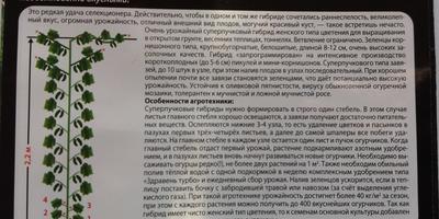 Пучковые суперогурцы - суперприз от SEEDSPOST.RU