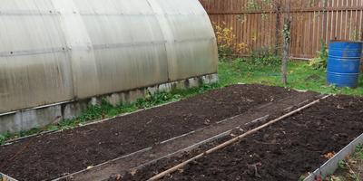 Моя огородная корзина на следующий сезон: выбираю сорта