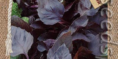 Пряные травы в контейнерах — композиция с цветами