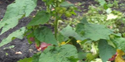 Помогите определить название цветка на снимке