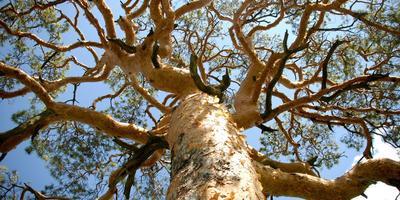 """Программа """"Деревья — памятники природы"""""""