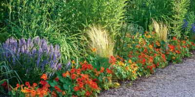 Живой «багет» для цветников
