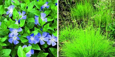 Модное веяние: злаки и другие декоративные растения для деревенского сада