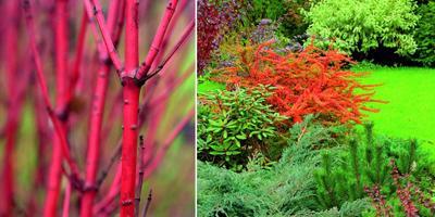 Растительная экономия: как оформить сад без особых затрат