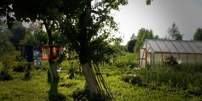 Жители моего сада-огорода. Лето...