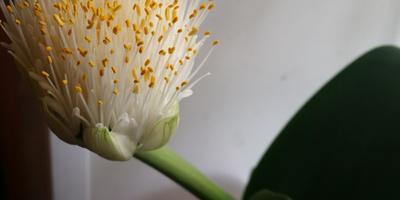Помогите узнать, что за растение