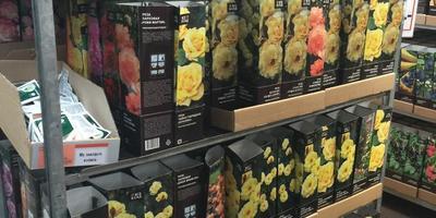 В ОБИ завезли саженцы роз в коробках