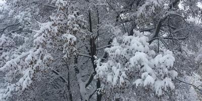 А у нас зима... как в сказке! А у вас?