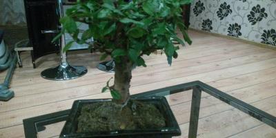 Помогите узнать название этого растения