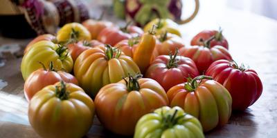 Экстравагантный и любимый сорт помидоров - Грибное лукошко