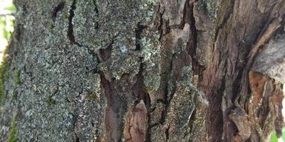 Подскажите, пожалуйста, как лечить деревья?