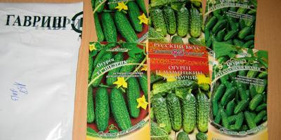Отчёт о получении посылки с семенами огурцов от компании Гавриш