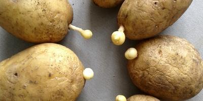 Что с картофелем?