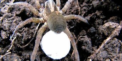 Что за пауки живут у нас на даче?