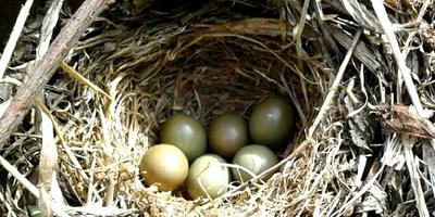 Можно ли перенести гнездо?