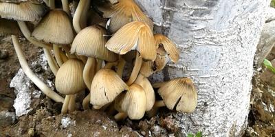Подскажите название грибов
