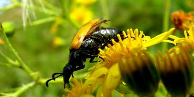 Что за насекомое на фото?