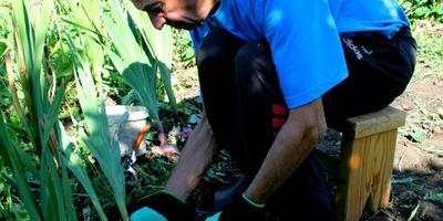 Тестирование перчаток Garden Genie Gloves. Тест 4: выборка луковиц гладиолусов