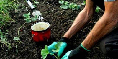 Тестирование перчаток Garden Genie Gloves. Тест 5: посадка клубники с помощью перчаток