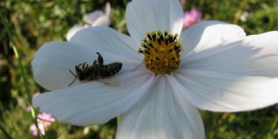 Почему погибла пчёлка?