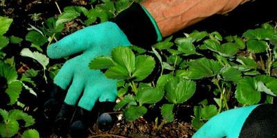 Тестирование перчаток Garden Genie Gloves. Тест 7: подготовка грядок с клубникой к зиме