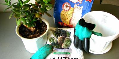 Тест 9: пересадка домашних цветов при помощи перчаток с когтями