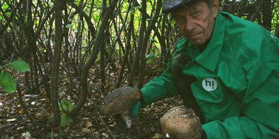 Тест 12: собираем грибы в перчатках с когтями