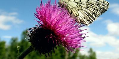 Что это за бабочка?