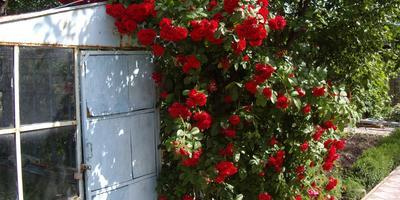 Шпалера, арка для розы или мини-пергола